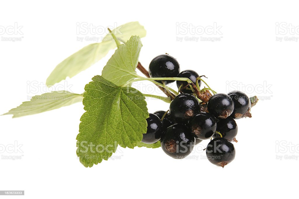 black currant panicle royalty-free stock photo