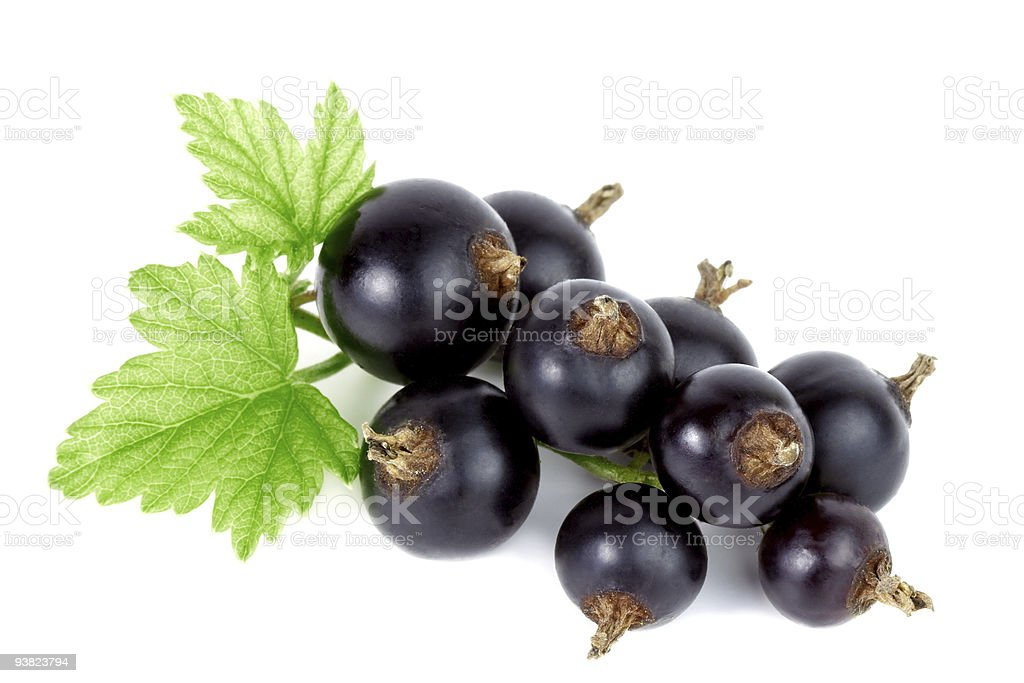 Black currant. royalty-free stock photo