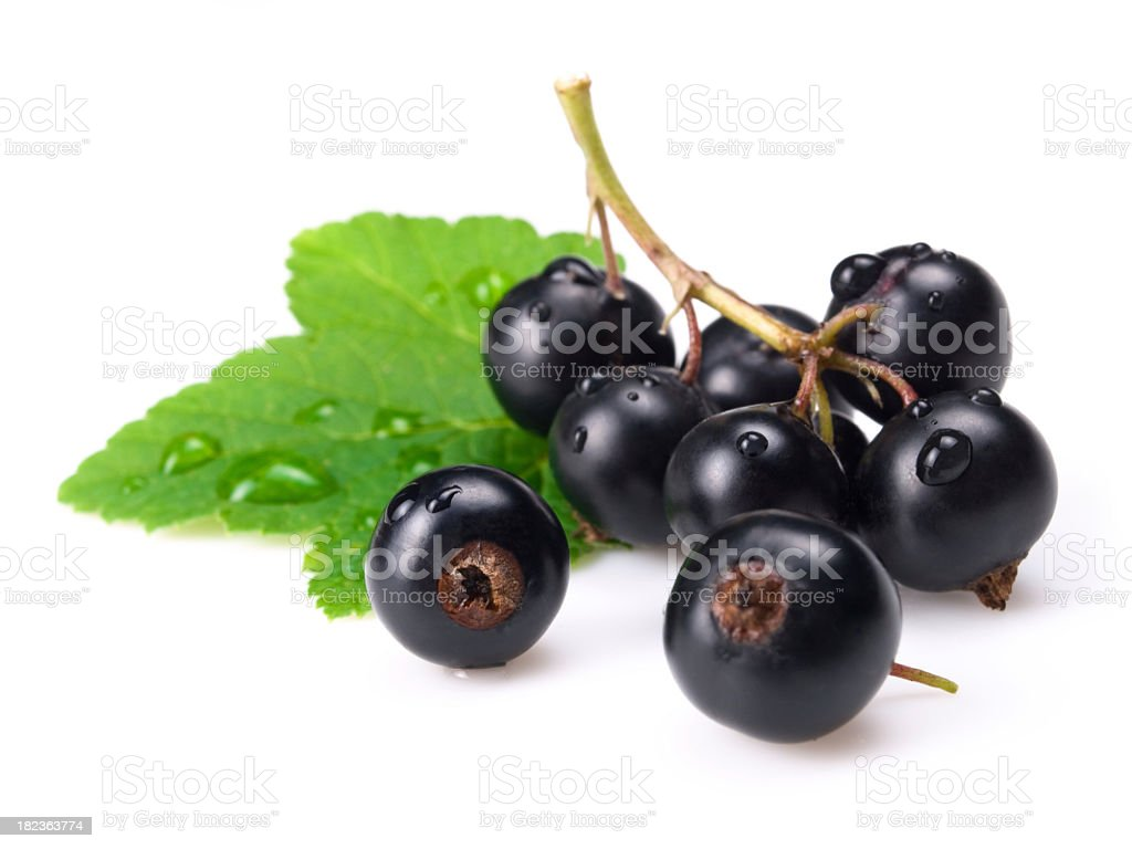 Black currants and green leaf isolated on white royalty-free stock photo