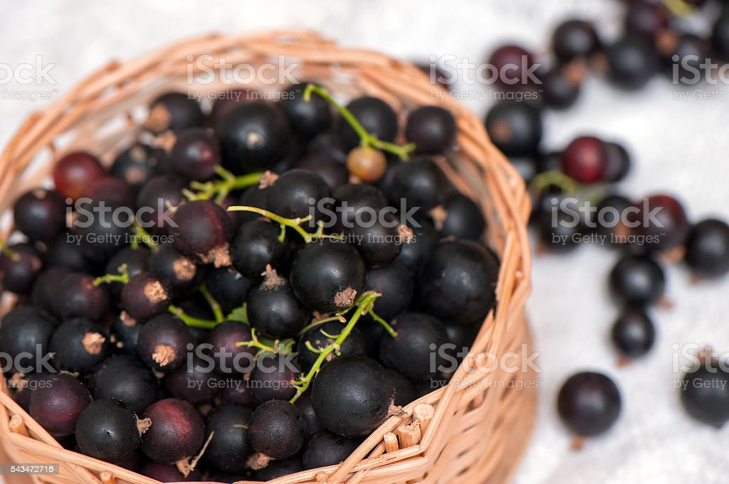 Black currants in a small wicker basket. stock photo