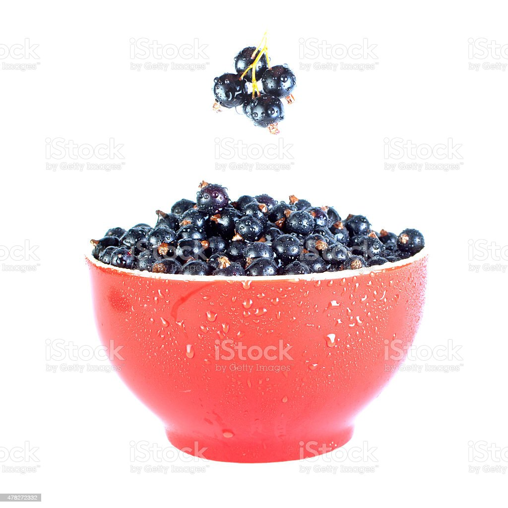 Black currants in red bowl on white stock photo