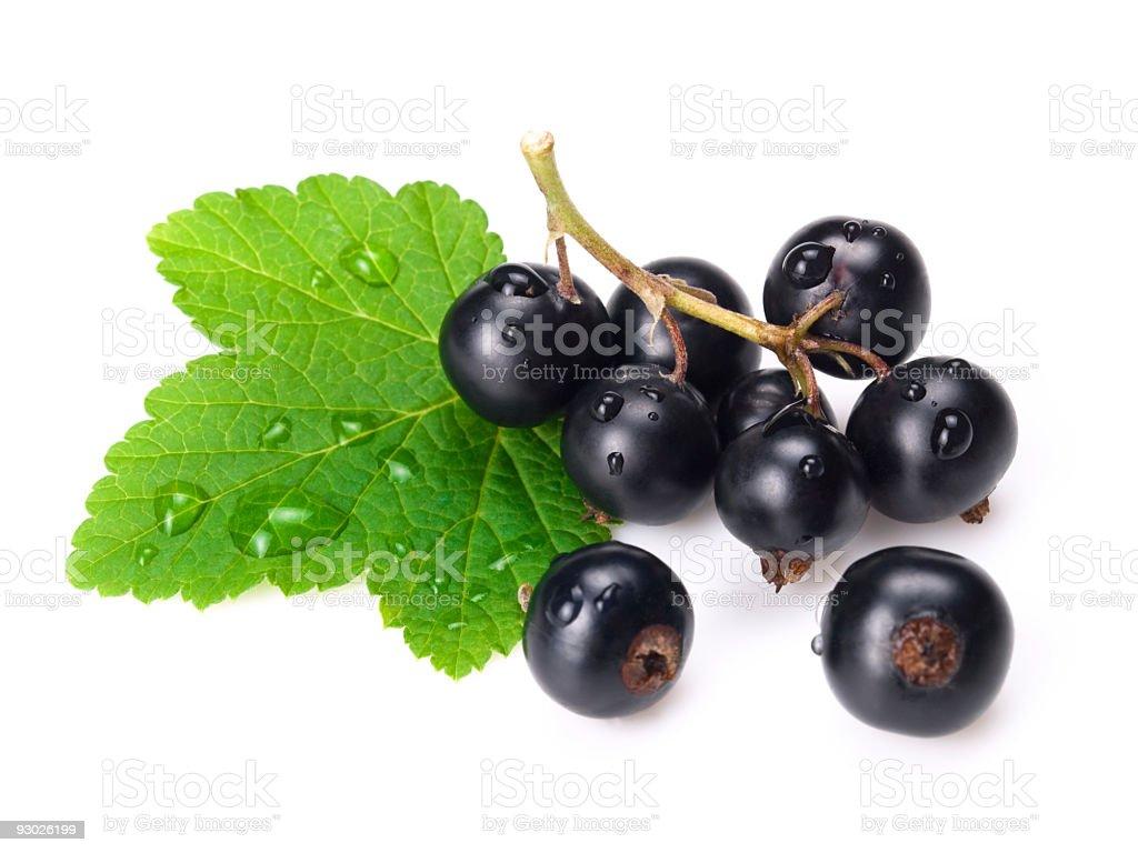 black currants royalty-free stock photo