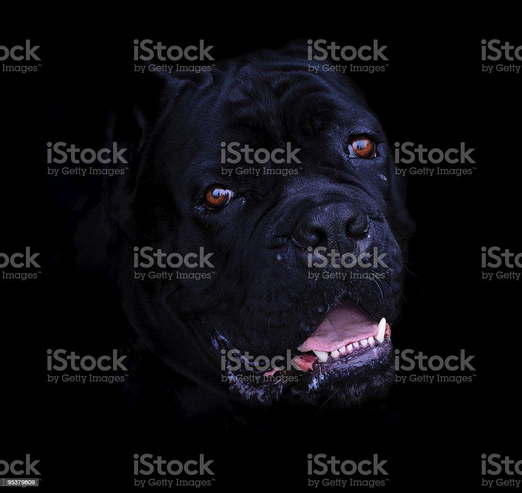 Black devil stock photo