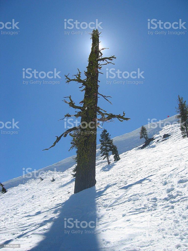 Black Diamond Tree royalty-free stock photo
