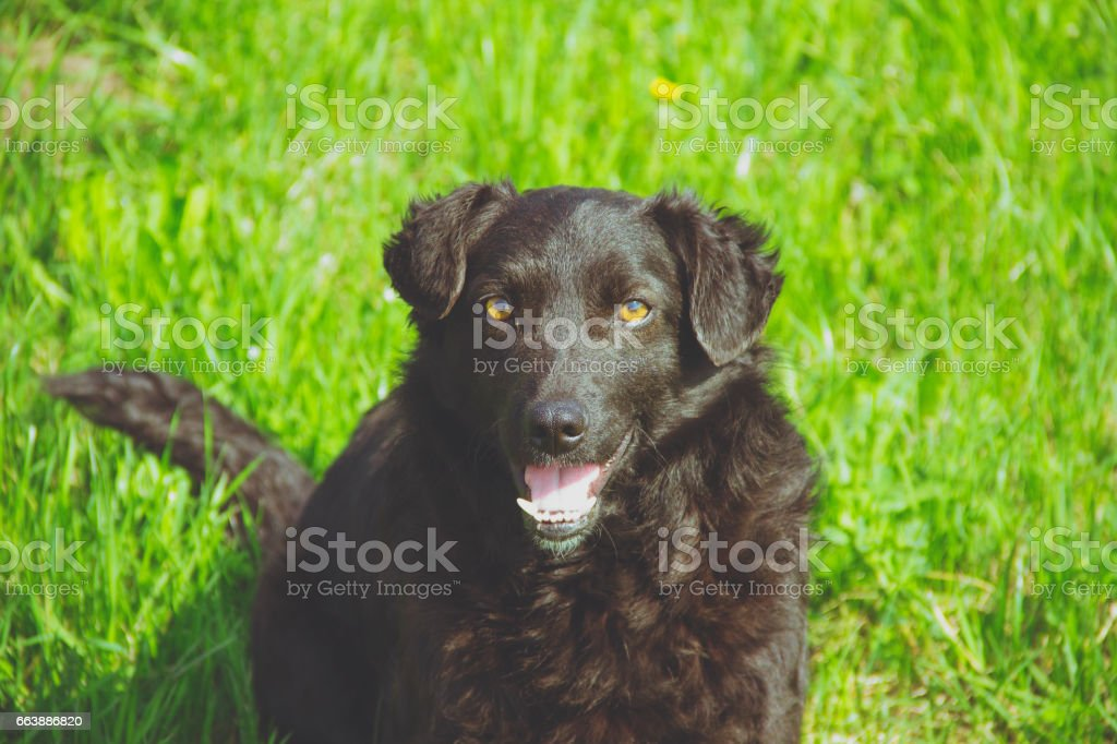 black dog in the nature stock photo