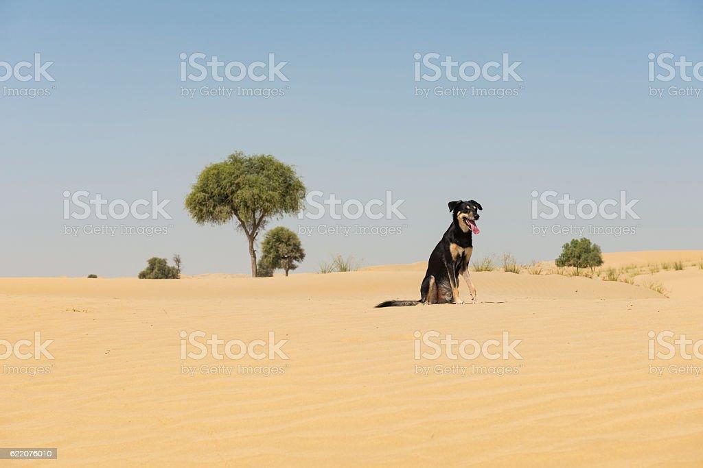 Black dog sitting in desert landscape stock photo