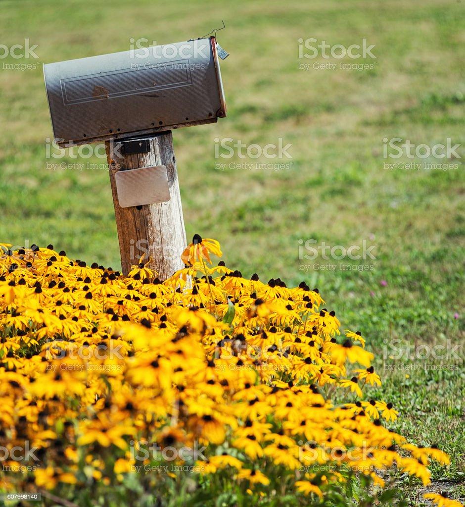 Black Eyed Mail stock photo
