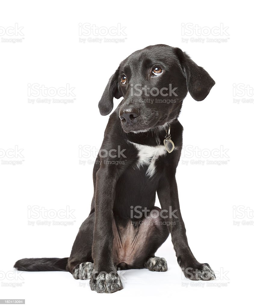 Black fearful puppy with hangdog expression stock photo