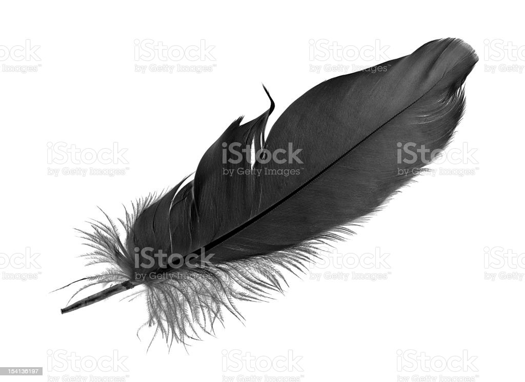 Black feather on white background stock photo