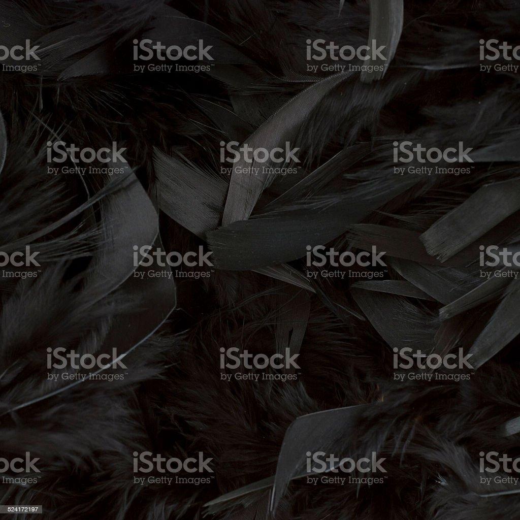 black feathers stock photo