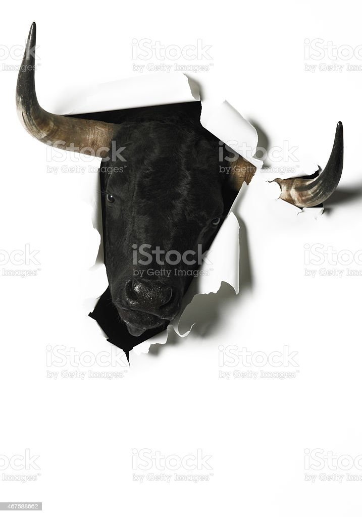 Black fighting bull head breaking a blank paper stock photo
