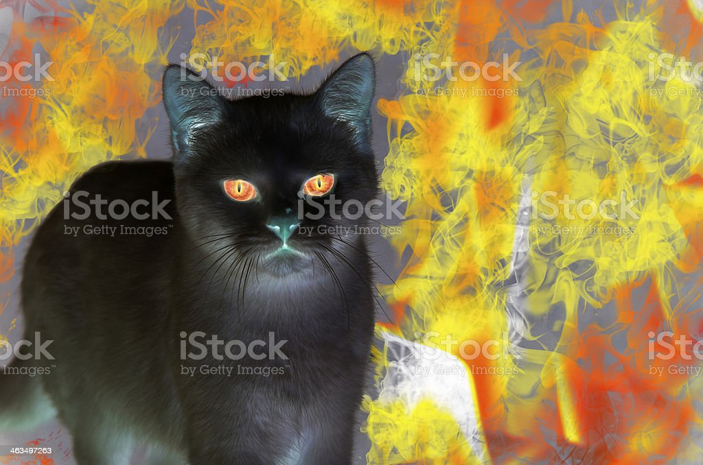 Black Fire Cat stock photo