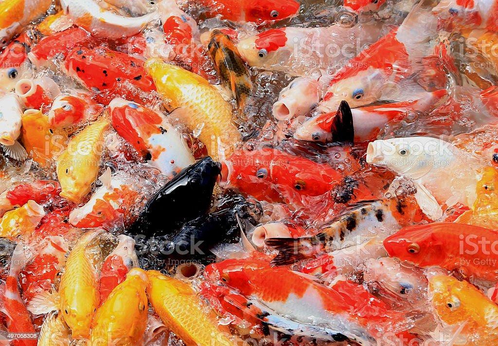 Black fish stock photo