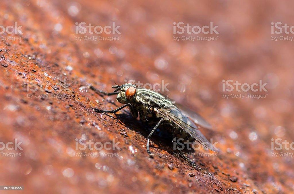 Black fly on corten steel sheet stock photo