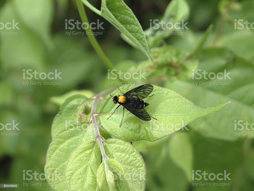 Black Fly On Leaf stock photo