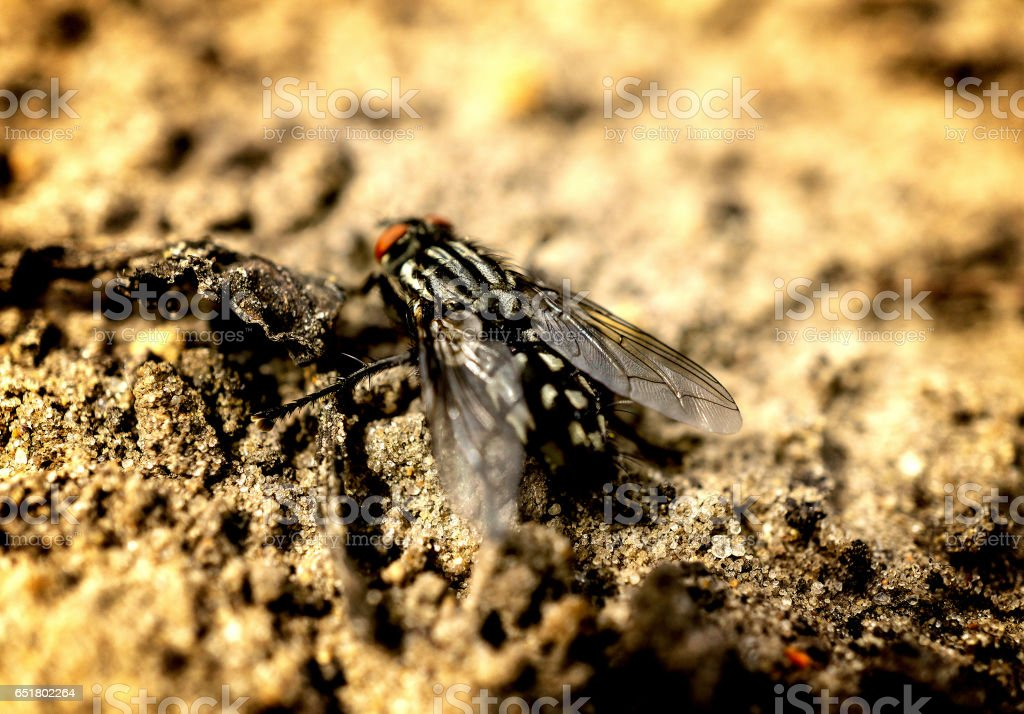Black fly on the ground high contrasted with vignetting effect stock photo
