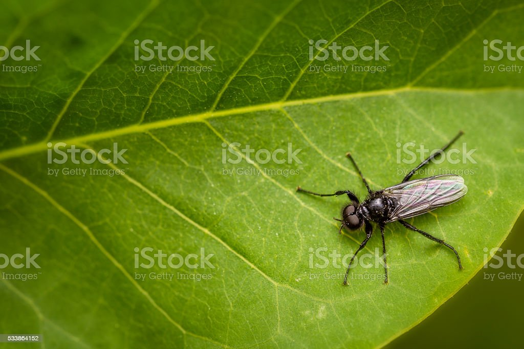 Black fly with dark eyes on a leaf stock photo