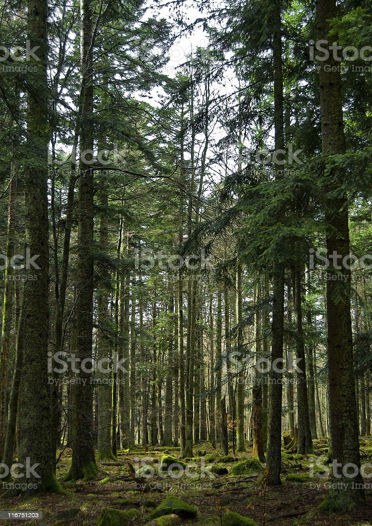 Black Forest- Deep Green Moss royalty-free stock photo