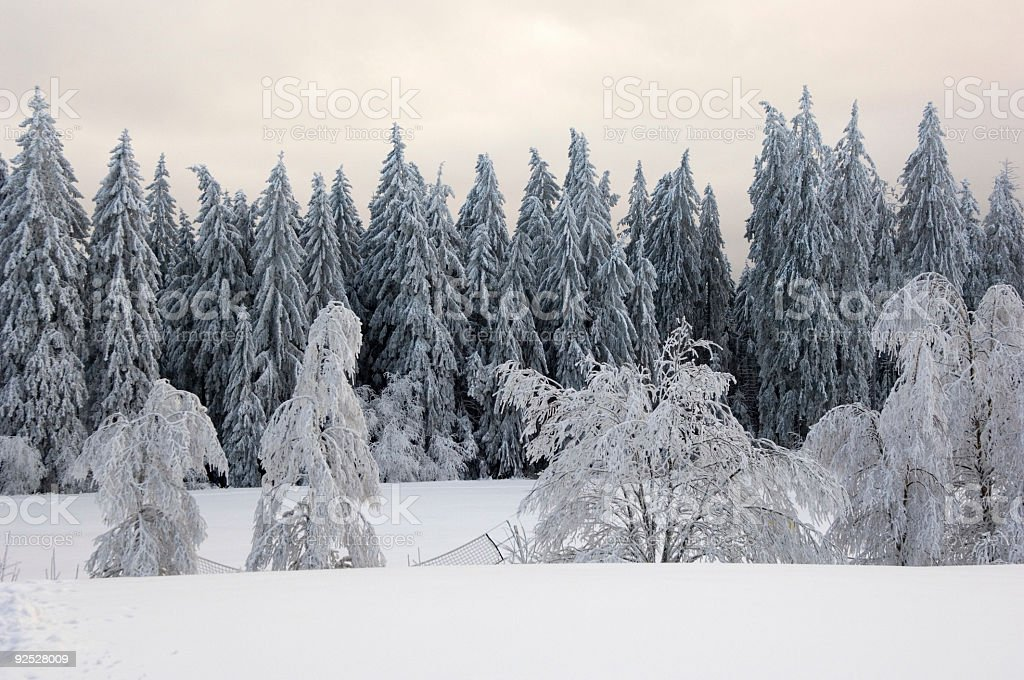 Black Forest Germany Winter Landscape royalty-free stock photo