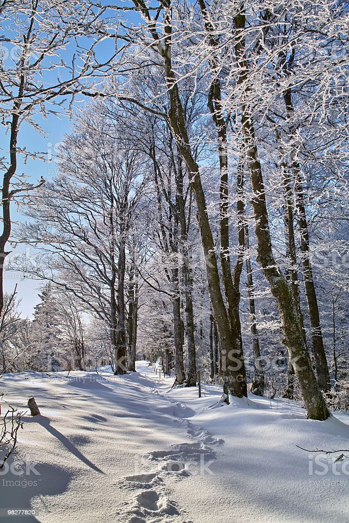 Black Forest in winter with trail at Schauinsland stock photo