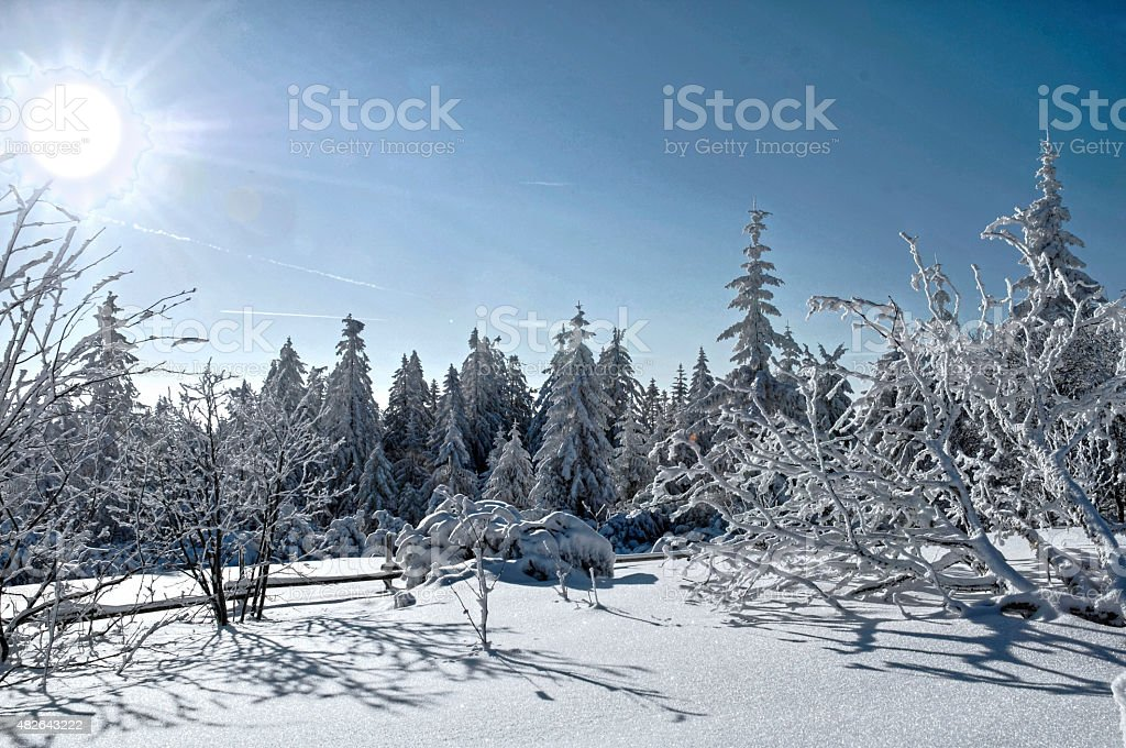 Black Forest National Park in winter with snow-covered fir stock photo