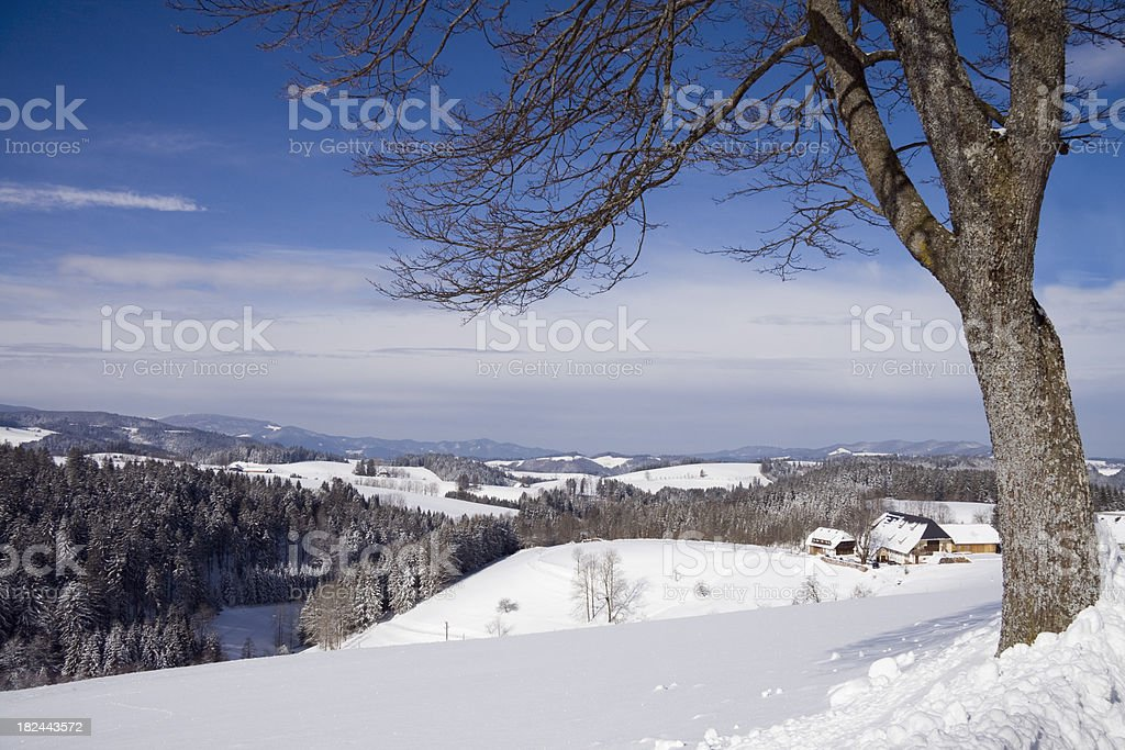 black forest winter royalty-free stock photo