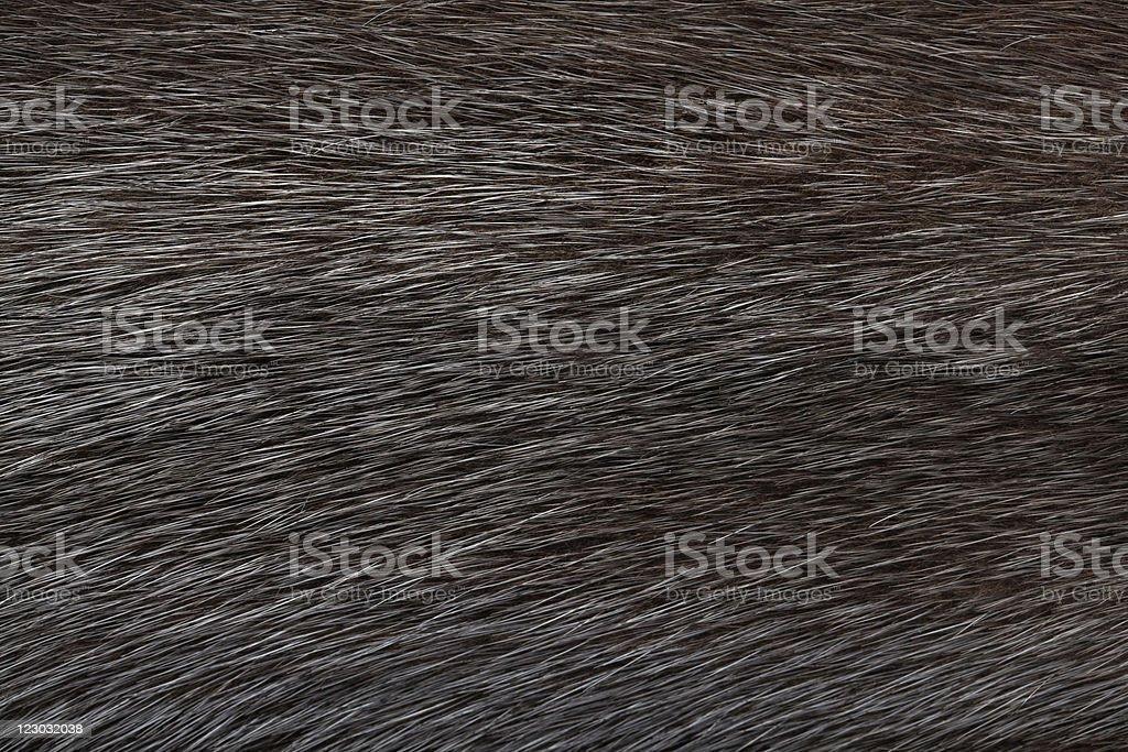 Black fur stock photo