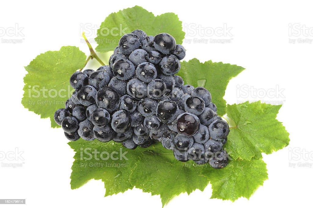 Black Grape with Vine stock photo