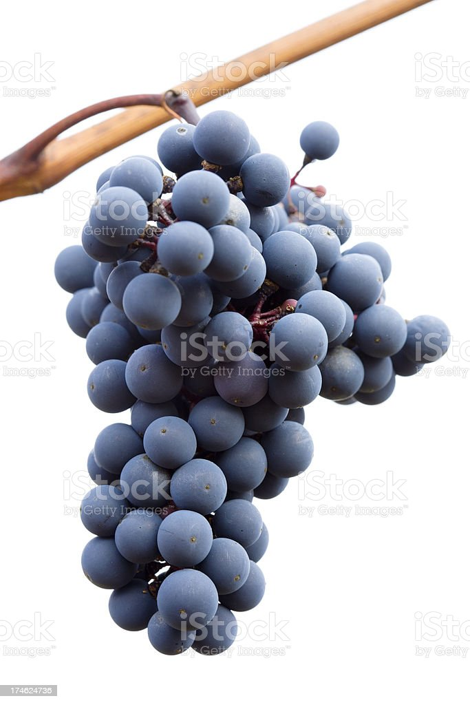 black grapes on white background stock photo