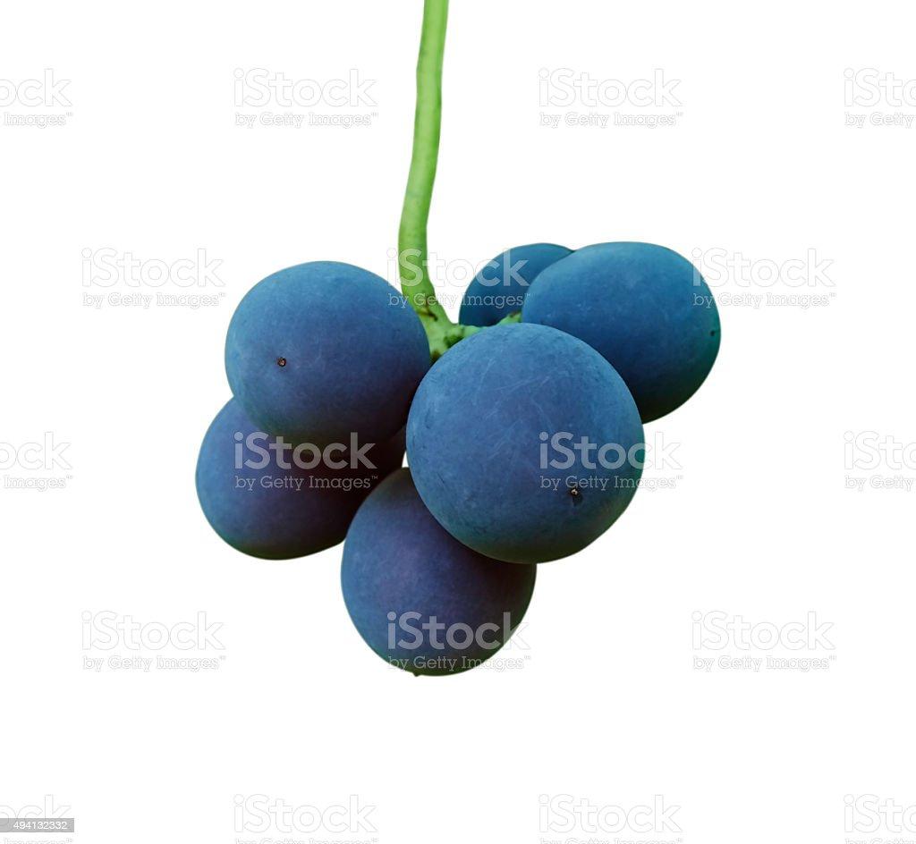 black grapes on white royalty-free stock photo