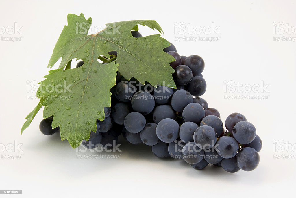 Black grapes on white stock photo