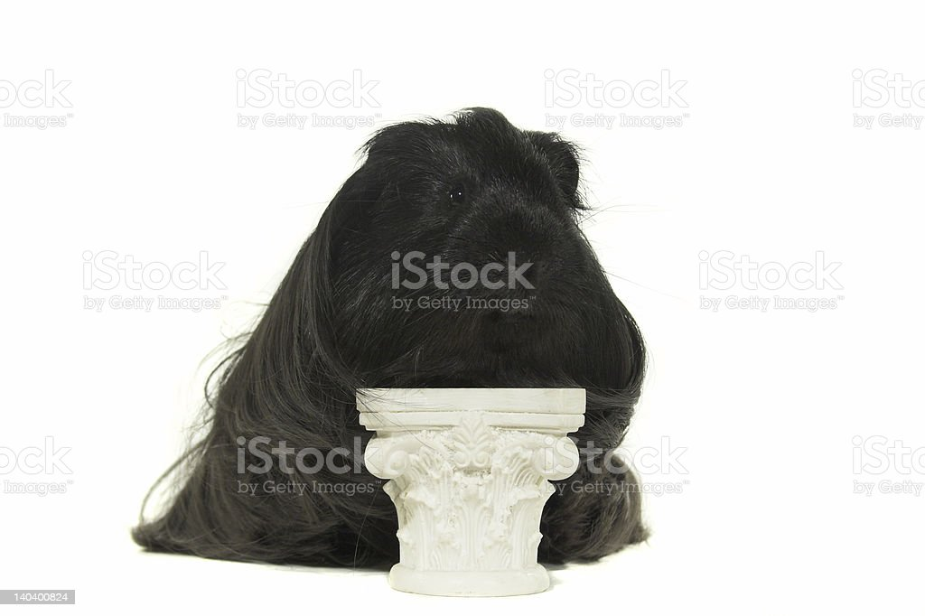 Black guinea big on the pedestal royalty-free stock photo