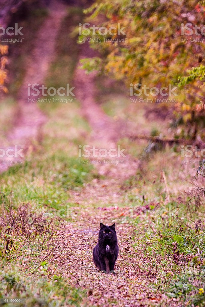 Black Halloween Cat Sitting on Long Rural Autumn Driveway stock photo