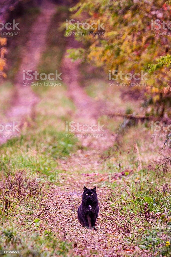 Black Halloween Cat Sitting on Long Rural Autumn Driveway stock photo