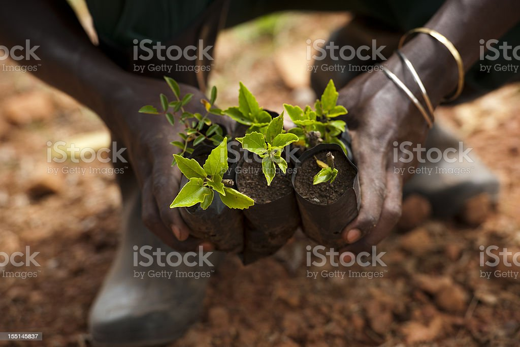 Black hands with plants royalty-free stock photo