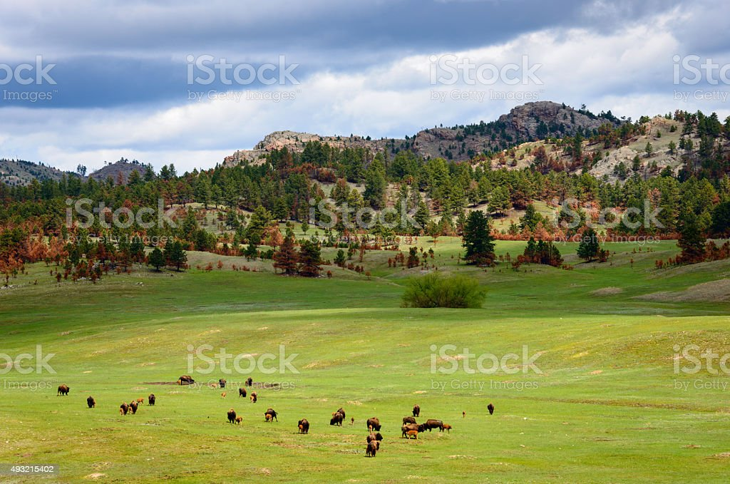 Black Hills stock photo