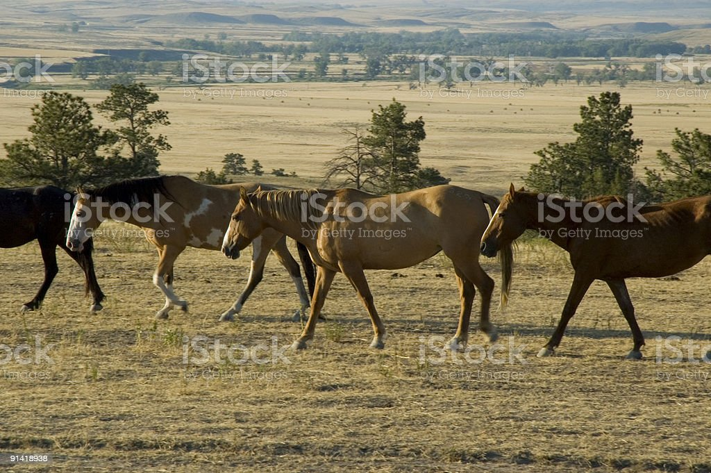Black Hills Wild Horse Sanctuary - South Dakota royalty-free stock photo