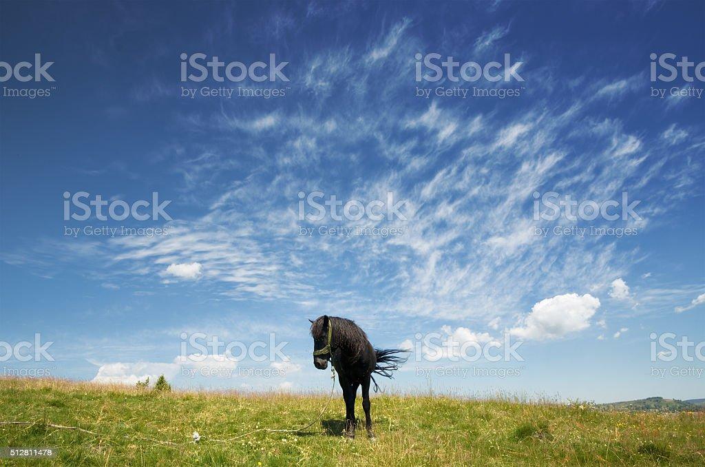 Black Horse Agaist Sky, Serbia stock photo
