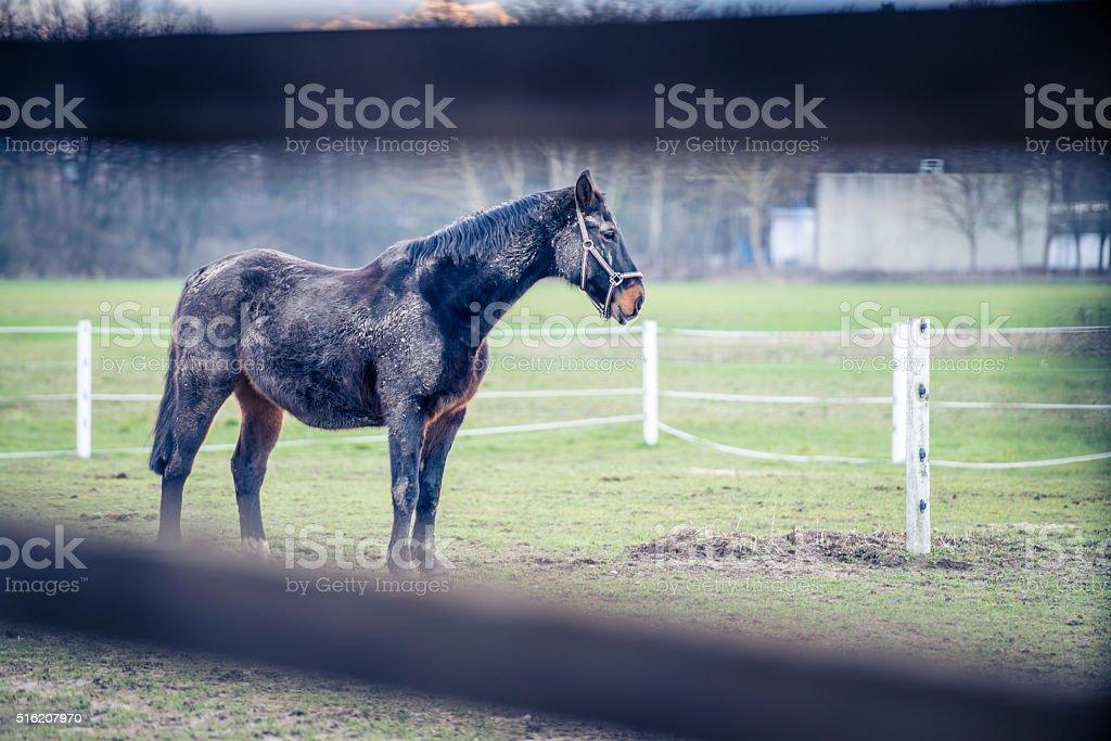 Black horse behind fence stock photo
