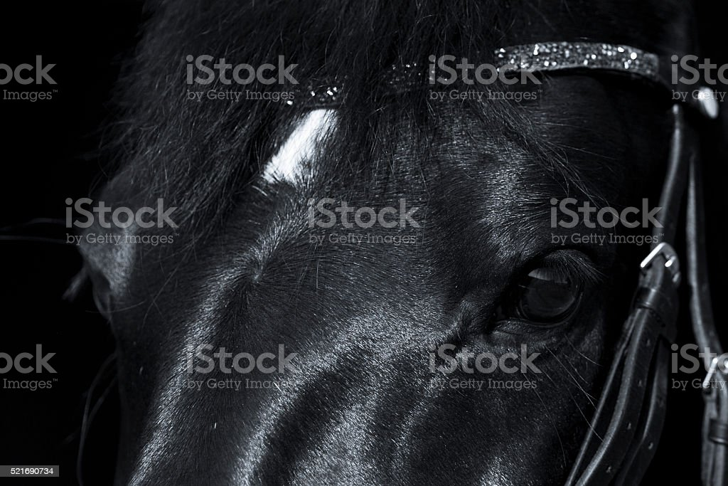 Black horse close up with beautiful rhinestone browband stock photo