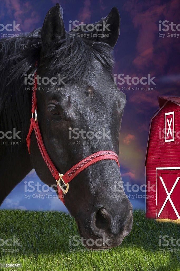 Black horse headshot stock photo