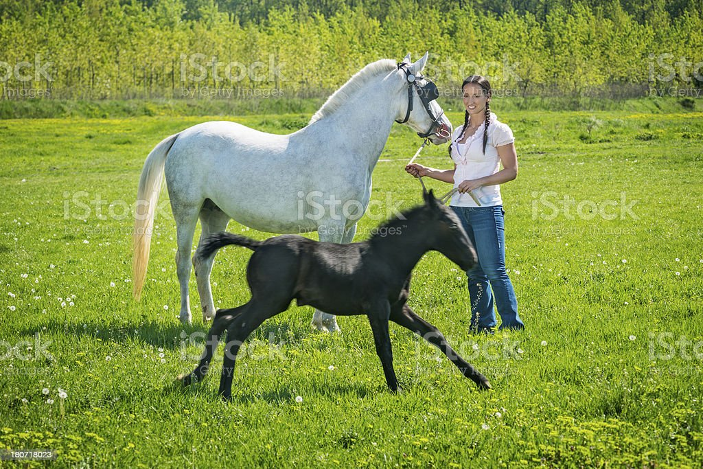 Black horse running royalty-free stock photo