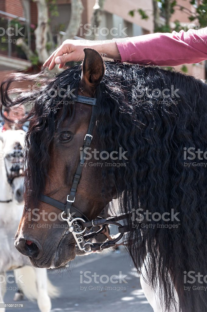 Black horse´s long mane stock photo