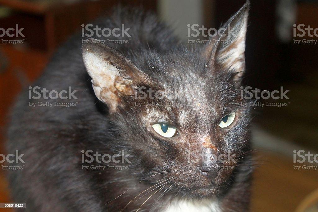 Black ill cat stock photo