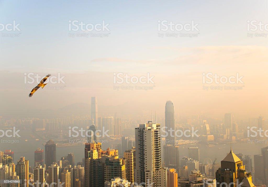 Black Kites of Hong Kong stock photo