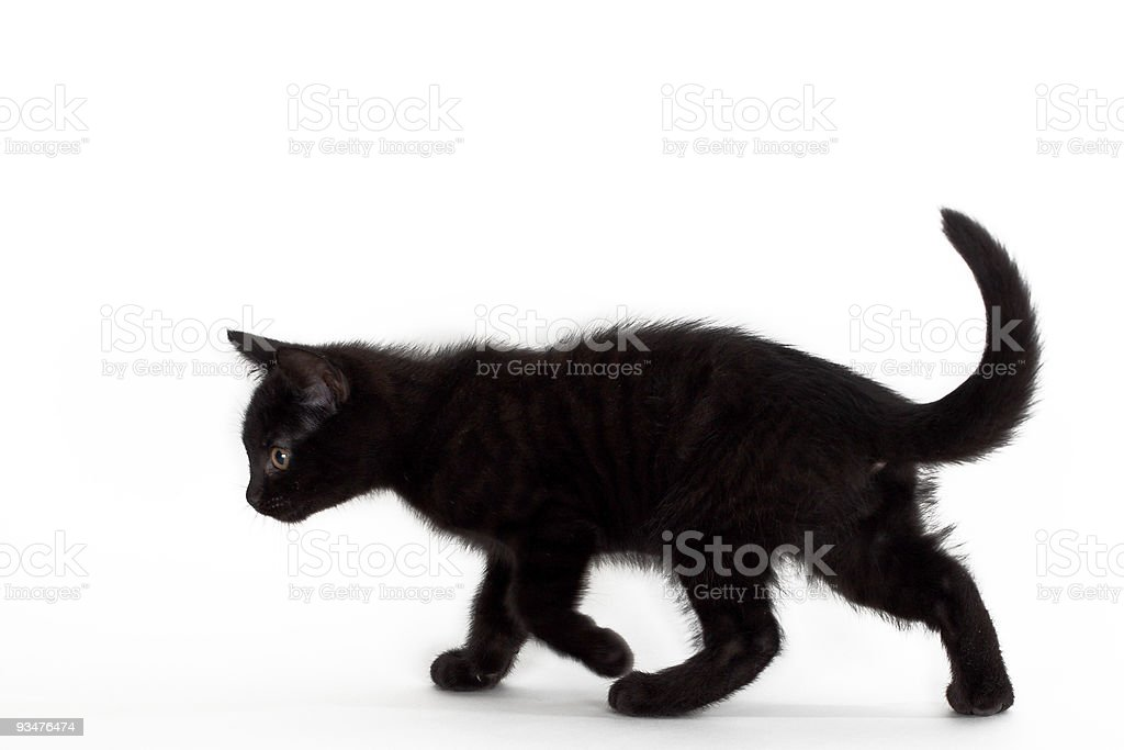 black kitten against white background stock photo