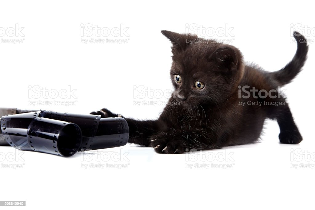 Black kitten and photographic film. stock photo