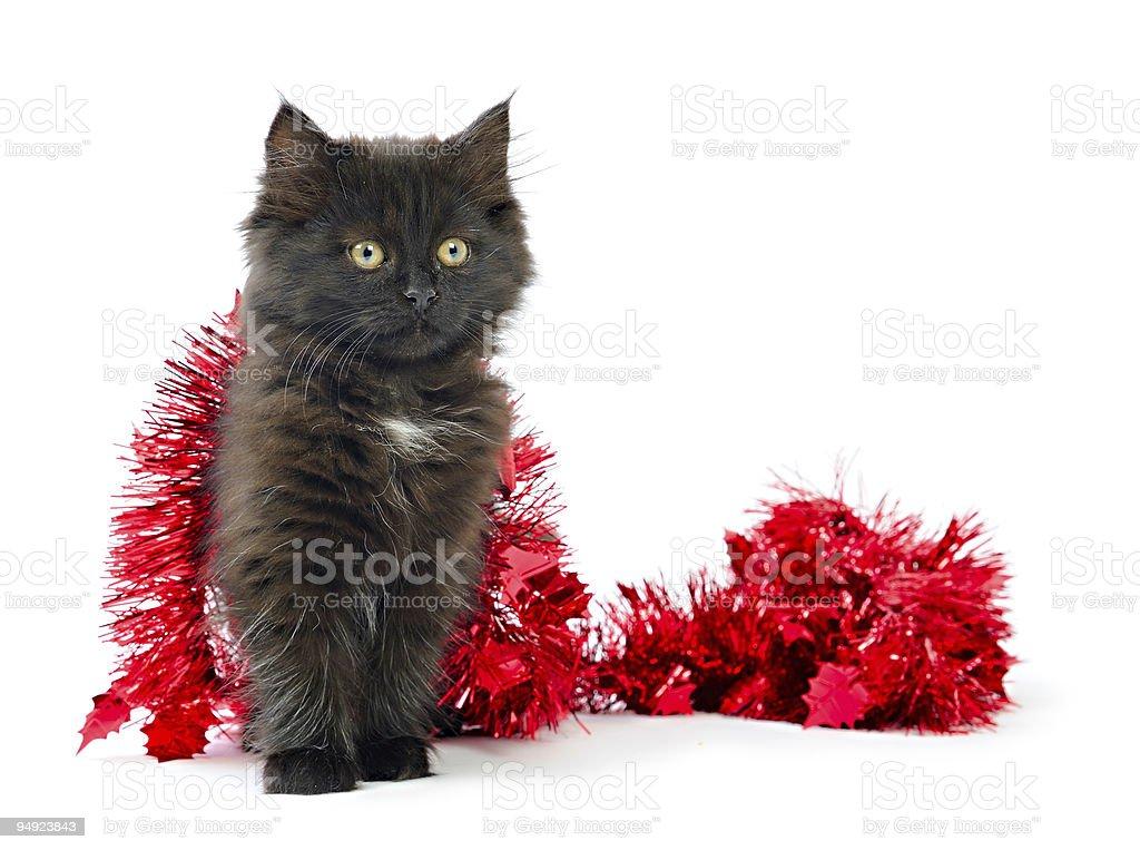 Black Kitten christmas  decoration royalty-free stock photo