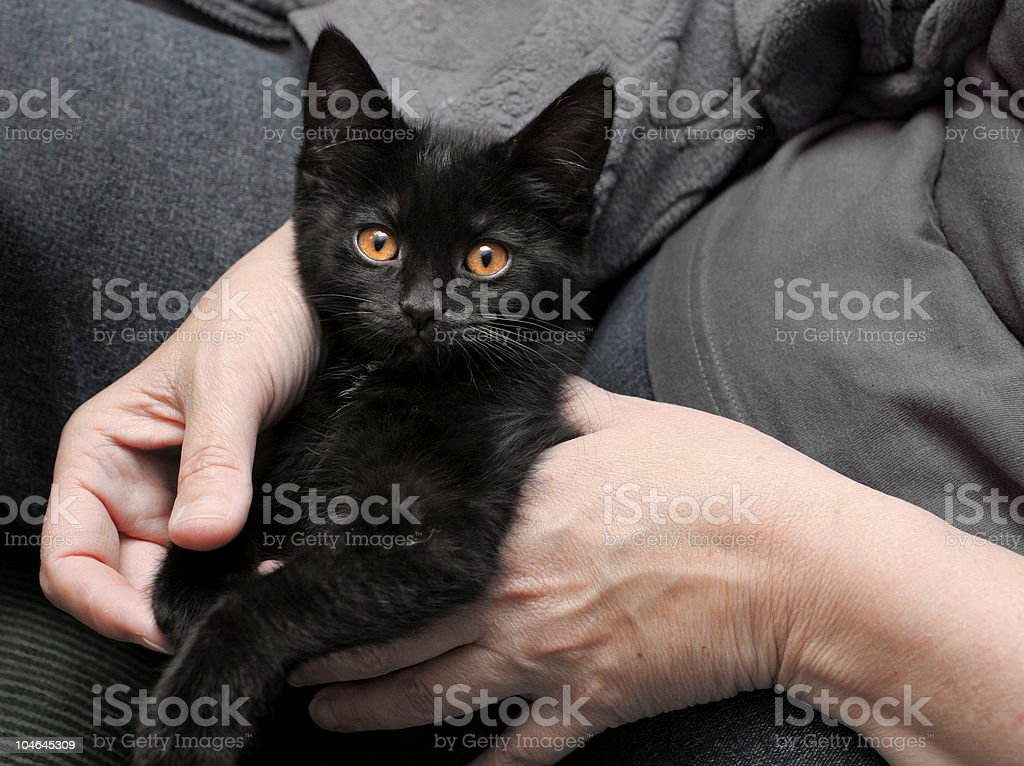 Black Kitten in a woman's hands royalty-free stock photo