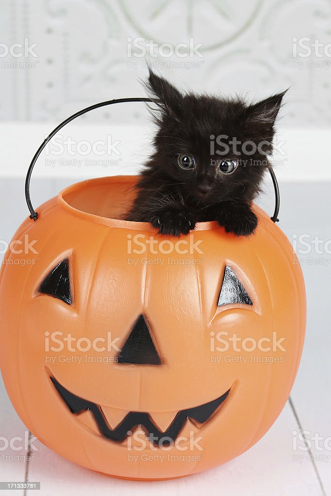 Black Kitten In Jack'O'Lantern stock photo